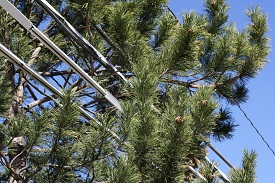 Responsibility of Electric Utilities to Trim Trees and Other Vegetation